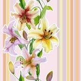 Красивая лилия цветет с зелеными листьями на пастельной striped предпосылке флористическая картина безшовная Прямой и вертикальны Стоковые Изображения