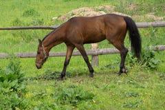 Красивая лошадь в природе над загородкой стоковая фотография rf