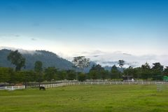 Красивая лошадь на ранчо стоковое фото rf