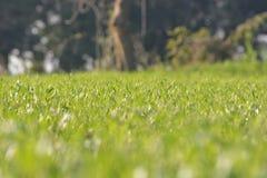 Красивая лужайка в плоскости  стоковое изображение rf