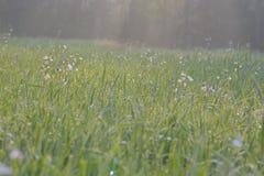 Красивая лужайка в плоскости  стоковая фотография rf