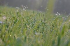 Красивая лужайка в плоскости  стоковое фото