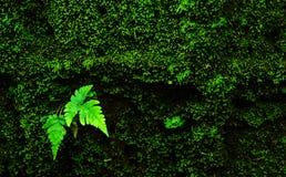 Красивая малая предпосылка лист папоротника Стоковая Фотография
