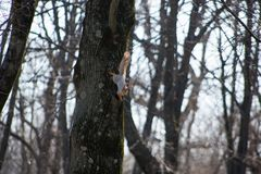 Красивая маленькая белка скача на деревья в солнечной погоде в парке города стоковое изображение rf