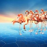 Красивая манипуляция фото с рядом красного фламинго Стоковое Фото