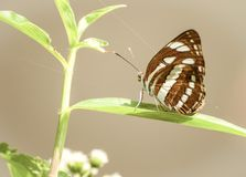 Красивая малая бабочка в природе Стоковые Фотографии RF