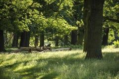 Красивая малая глубина ландшафта поля сочное зеленое woodlan Стоковые Изображения RF