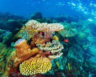 Красивая морская флора и фауна Стоковое фото RF