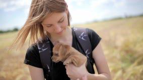 Красивая молодая женщина продолжает ее руки щенка чихуахуа на поле акции видеоматериалы