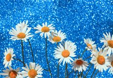 Красивая нежная белая маргаритка цветет в умном букете brilli Стоковые Фото