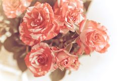 Красивая, нежная предпосылка с розами Нежные розы на свете Стоковые Изображения