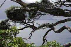 Красивая Новая Зеландия Стоковое Фото