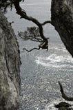 Красивая Новая Зеландия Стоковое Изображение