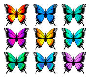 Красивая оранжевая бабочка в различных положениях Стоковые Изображения