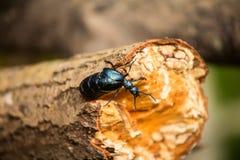 Красивая оранжевая бабочка сидя на зеленых лист в крупном плане forestA лета красивом синего жука на стволе дерева i Стоковые Фото