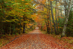Красивая дорога в осени стоковая фотография rf