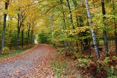 Красивая дорога в осени стоковые фото