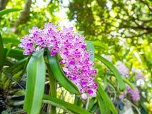 Красивая орхидея в парке стоковые изображения