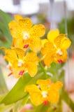 Красивая орхидея в саде, красочная орхидея в саде Стоковые Изображения