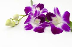 Красивая орхидея Стоковое Изображение RF