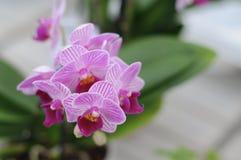 Красивая орхидея Стоковое фото RF