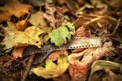 Красивая осень в лесе стоковые изображения rf
