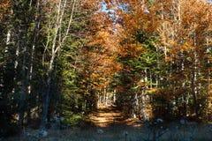 Красивая осень золота с желтой, зеленый, апельсин Стоковые Изображения