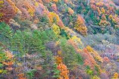 Красивая осень на горе стоковые изображения rf