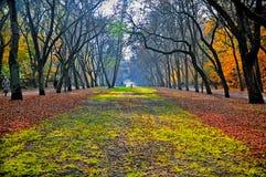 Красивая осень Стоковое фото RF