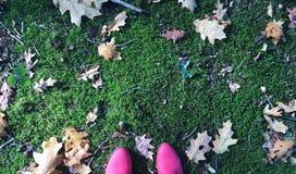 Красивая осень стоковая фотография
