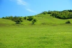Красивая лошадь на зеленом выгоне горы Стоковая Фотография
