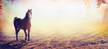 Красивая лошадь на изумительной предпосылке природы осени, знамени Стоковое Фото