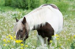 красивая лошадь пасет в луге Стоковые Фотографии RF