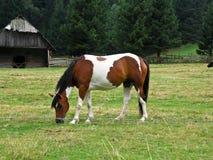 Красивая лошадь Стоковые Фото