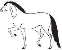 Красивая лошадь Стоковое фото RF
