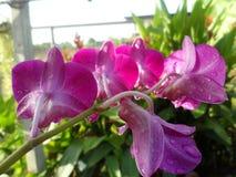 Красивая одичалая орхидея Стоковые Фото
