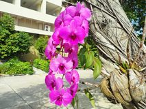 Красивая одичалая орхидея Стоковые Фотографии RF