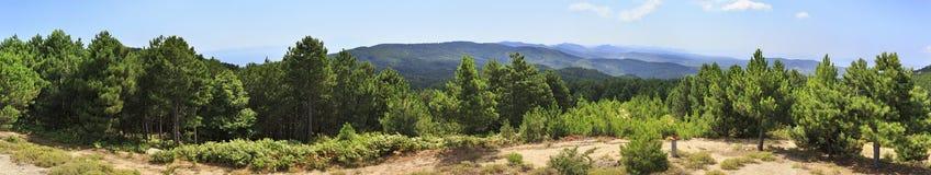 Красивая панорама сосен на верхней части горы Стоковые Фото