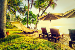 Красивая пальма кокоса на пляже и море Стоковая Фотография RF