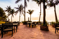 Красивая пальма кокоса на пляже и море Стоковые Изображения
