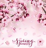 Красивая печать с blossoming темный и светлый - розовая Сакура иллюстрация штока