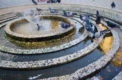 Красивая питьевая вода птиц Стоковое Фото