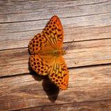 Красивая покрашенная бабочка Стоковые Изображения RF