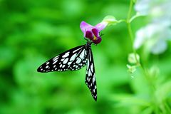 Красивая посадка бабочки на фиолетовом цветке Стоковые Фотографии RF