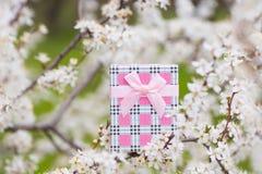 Красивая подарочная коробка окруженная путем цвести ветви весны tr Стоковая Фотография RF