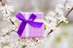 Красивая подарочная коробка окруженная путем цвести ветви весны tr Стоковые Изображения