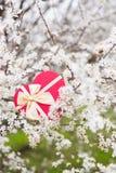 Красивая подарочная коробка окруженная путем цвести ветви весны tr Стоковое Изображение RF
