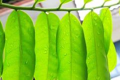 Красивая польза листьев зеленого цвета для предпосылки Стоковая Фотография