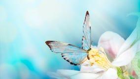 Красивая предпосылка весны с бабочкой и цветком Космос для текста Предпосылка шаблона границы лета весны флористическая панорамно стоковые изображения