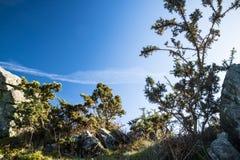 Красивая предпосылка в горах, Баскония вегетации сельской местности, Франция Стоковые Фото